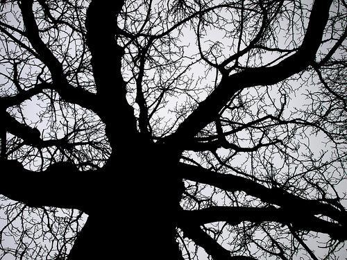 Dutch Tree