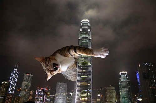 Gatto feroce