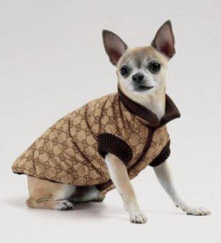 Cappottino cane
