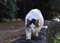 Gatto feroce medio