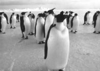 pinguini's community