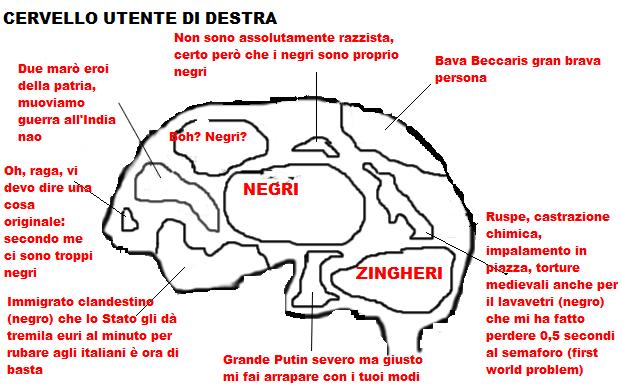cervello due